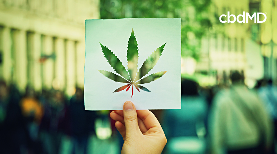 A hand holds up a piece of paper with a hemp leaf cut out