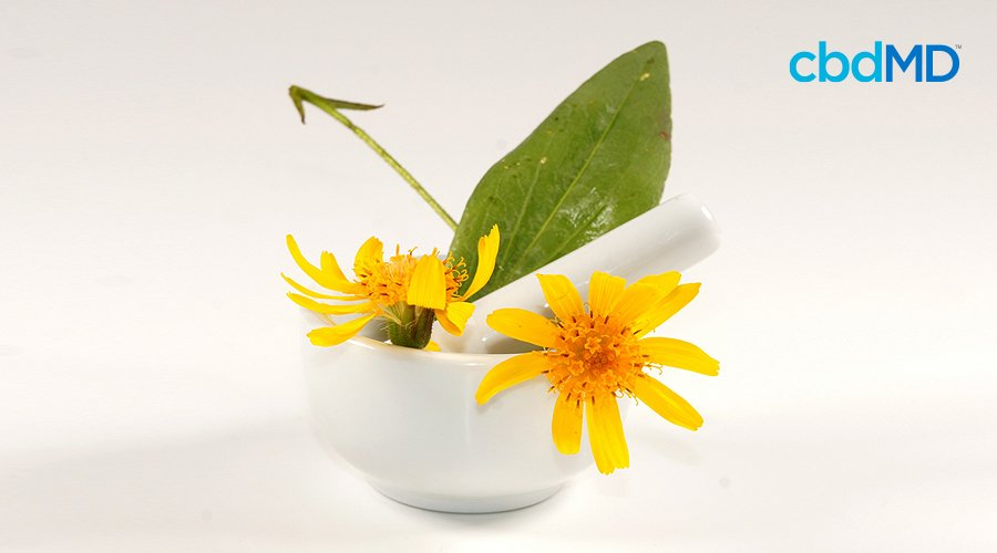 A mortar and pestle filled with bright yellow arnica flowers and green leaves rests on a white background