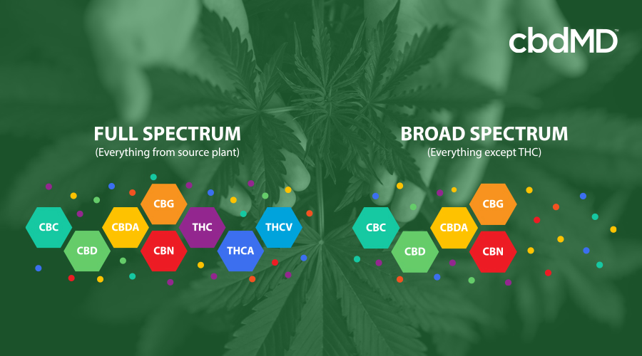 A colorful diagram shows the chemical composition of full spectrum and broad spectrum cbd