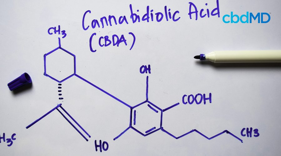 The chemical composition of cannabidiolic acid is drawn in blue marker on a whiteboard