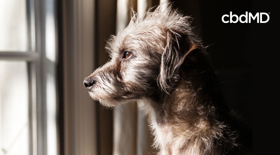 A large white dog stares out a window in a dark room