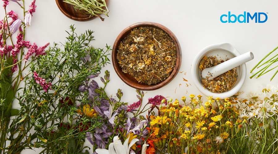 A wide range of herbs sit together with a mortar and pestle