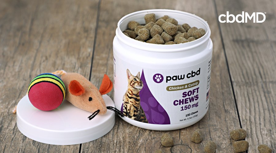A container of cbd cat treats from cbdmd sits open next to a toy mouse