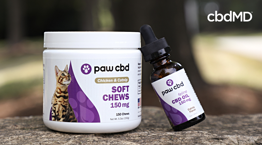 cbd products for cats including cbd treats for cats from cbdmd sit on a stone wall