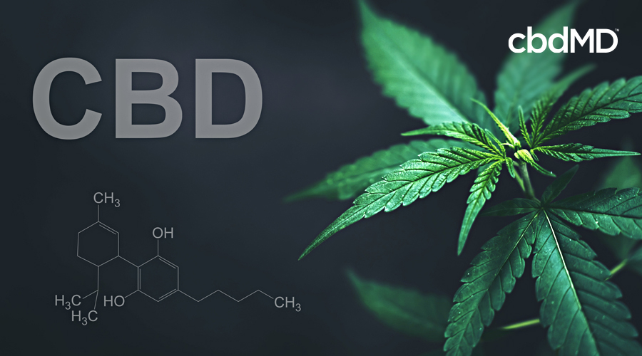 A cannabis plant sits against a plain background with CBD in the foreground