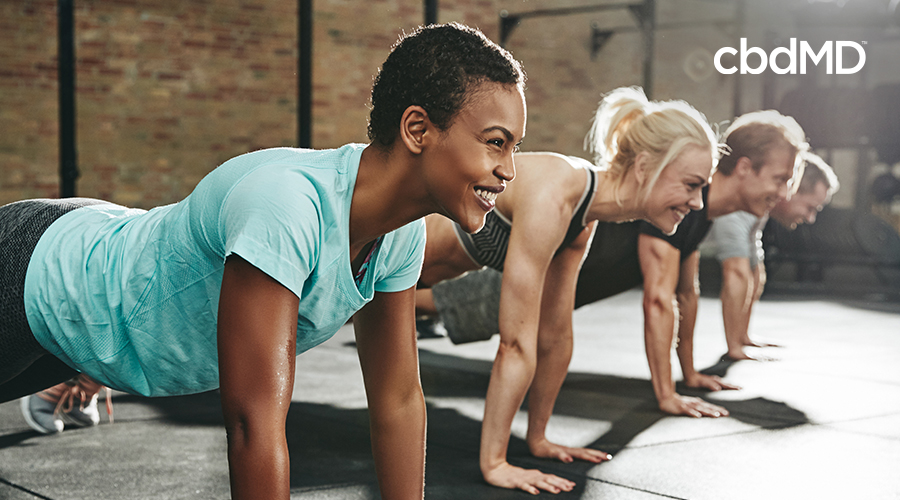 A diverse group of attractive woman in workout clothes hold the plank position