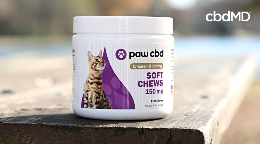 A bottle of cbd soft chews for cats sits on a wooden table