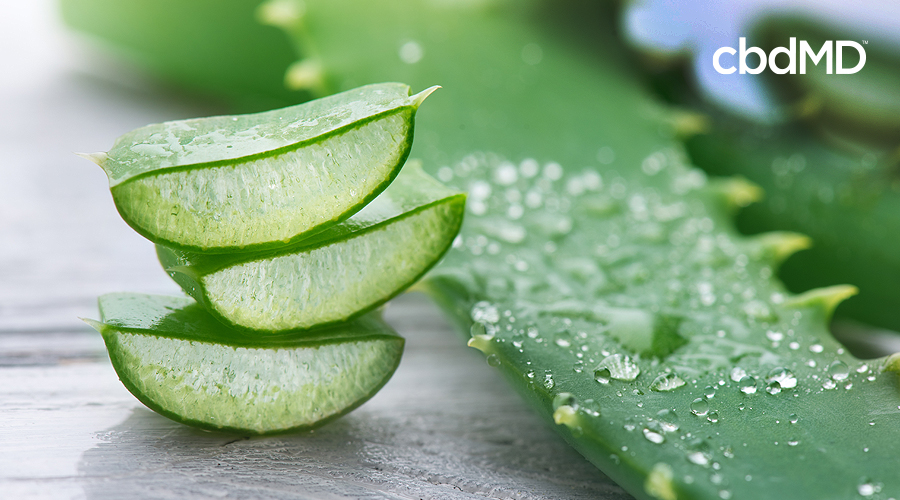A stack of sliced aloe vera leaves sit next to a whole aloe vera stalk