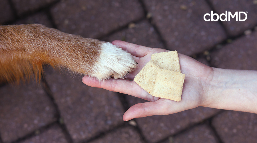 A hand holds out three cbd dog treats while a dogs paw rests on the hand next to the treats