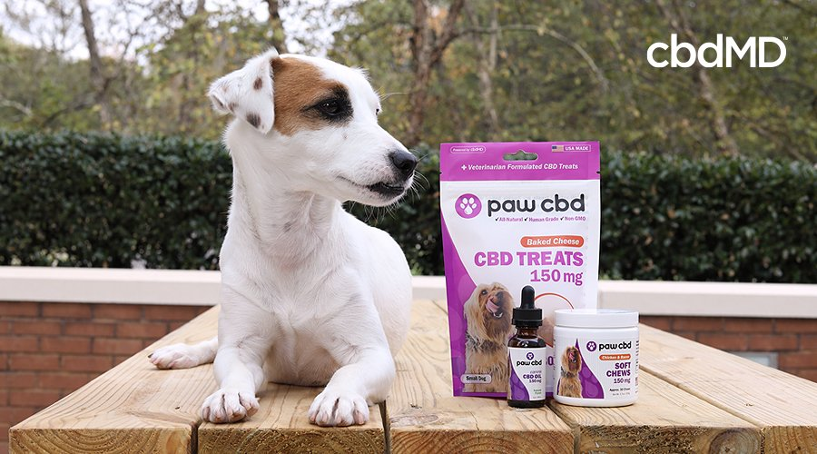 A small white and brown dog sits on a table next to a collection of cbd dog products from paw cbd