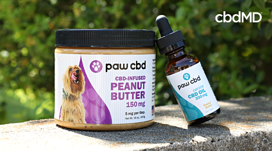 A jar of cbd peanut butter for pets and a bottle of cbd oil for dogs from cbdmd sits on a concrete railing