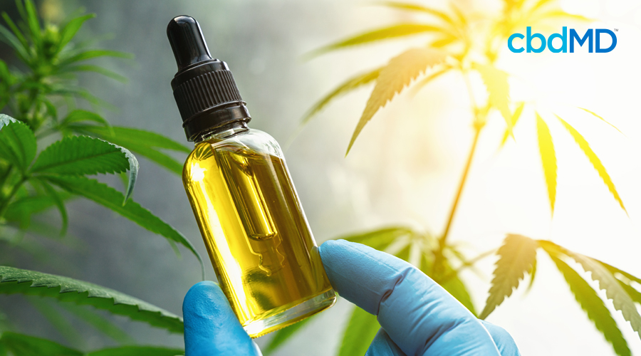 A blue gloved hand holds up a clear dropper bottle of cbd oil