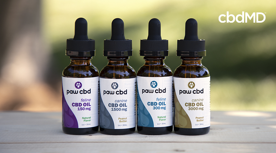 Four paw cbd pet cbd oil tincutures sits in a row on a wooden table