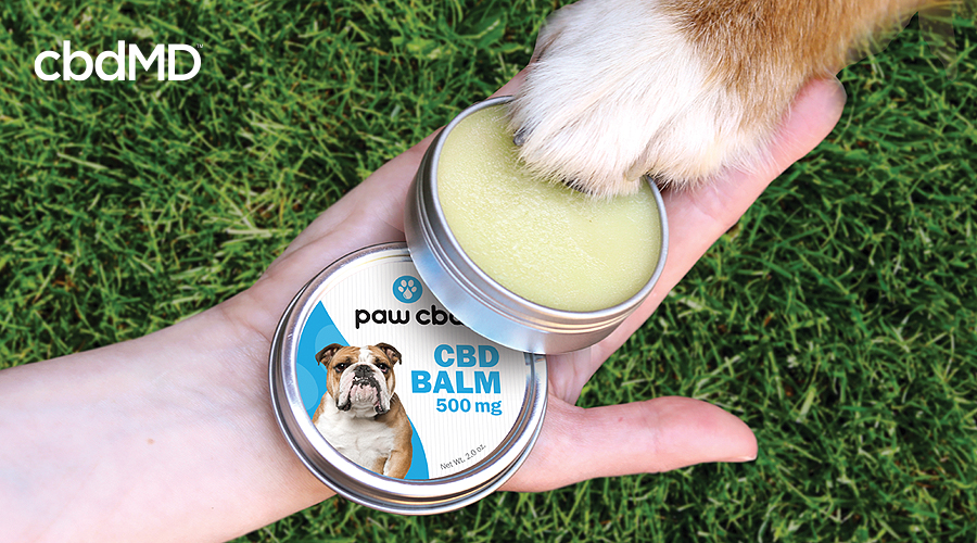 A human holds out paw cbd balm for dogs as a dog puts his paw onto the open can