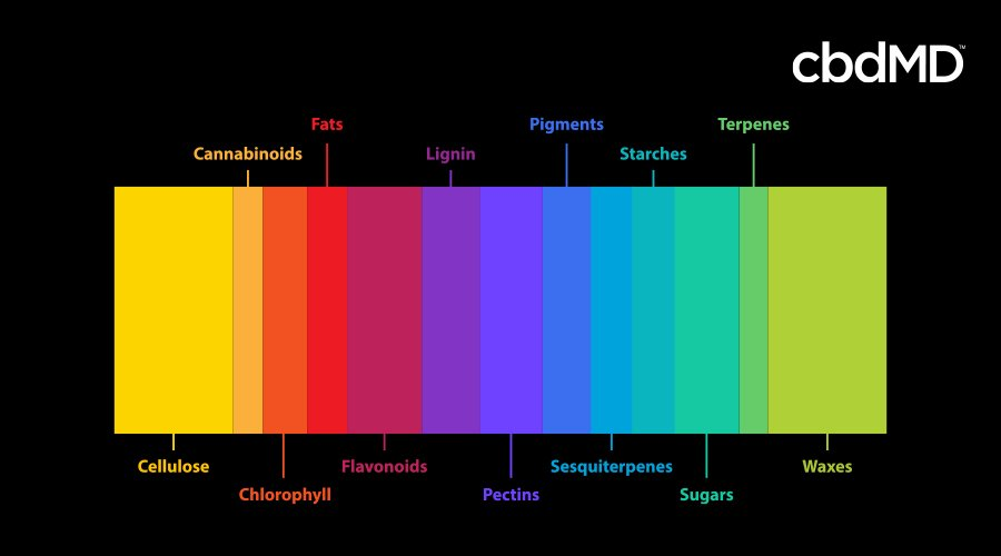 A brightly colored spectrograph image shows the various compounds in cannabis