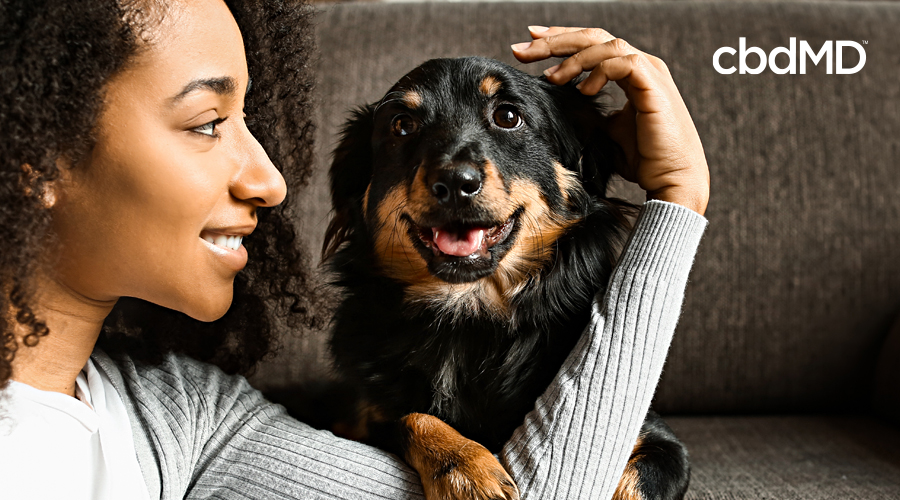 A dark skinned woman pets her black and brown mixed terrier