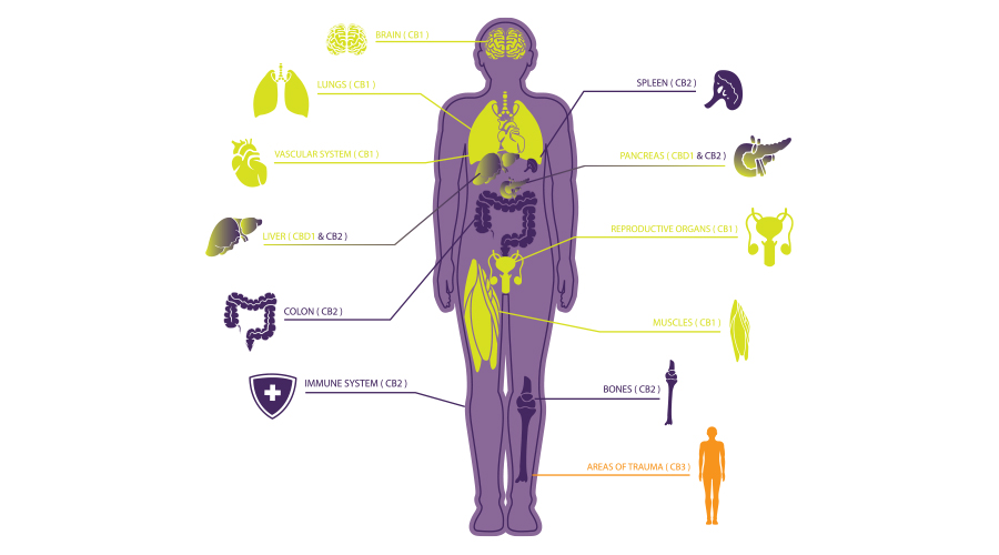 A diagram of the human body in purple shows the major organ systems