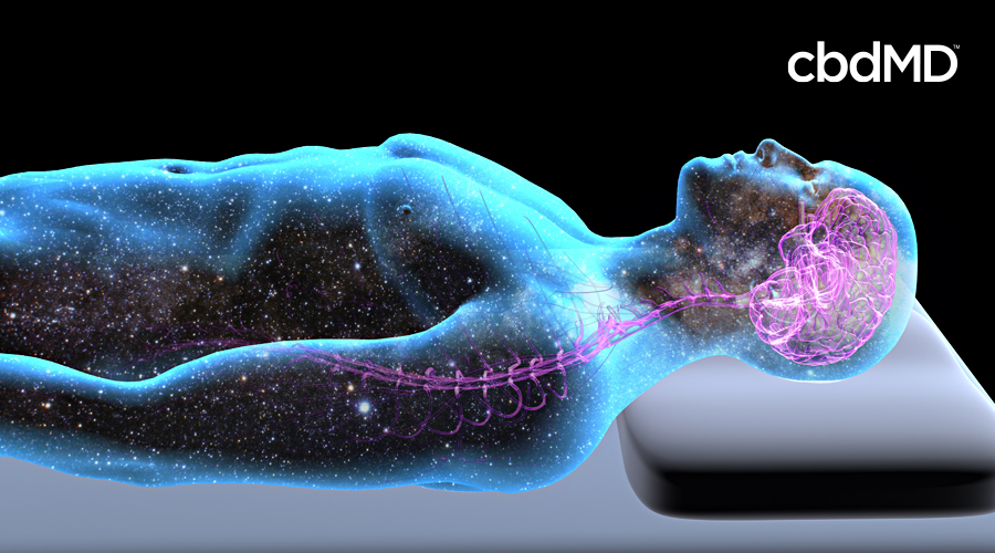 A transparent human body lies down with the nervous system highlighted in purple