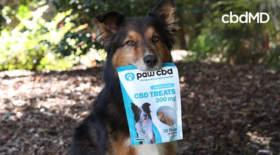 A black and brown dog holds a bag of cbd treats for dogs from paw cbd
