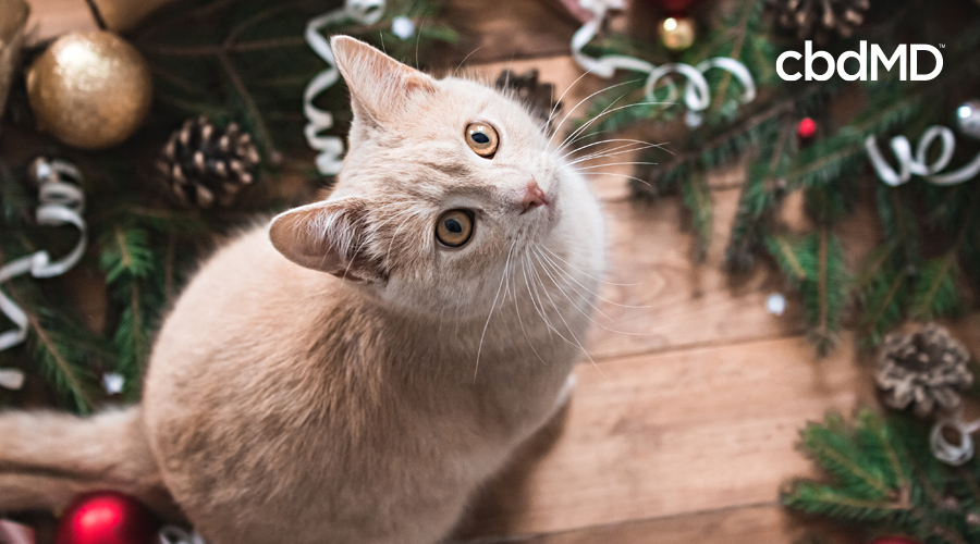 A white cat sits next to a christmas tree among holiday decorations