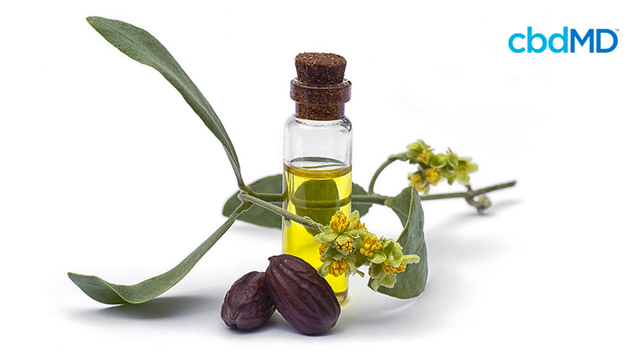 A collection of natural ingredients from which jojoba oil originates sits on a white background