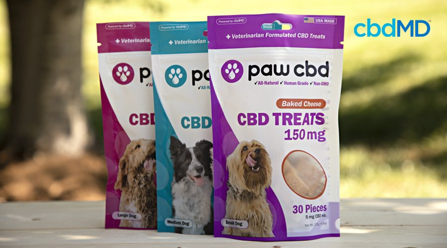 Three bags of cbd dog treats from cbdmd sits together on a stone wall
