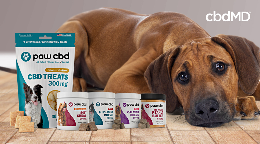 A large brown dog lays beside a collection of cbd treats for dogs from cbdmd