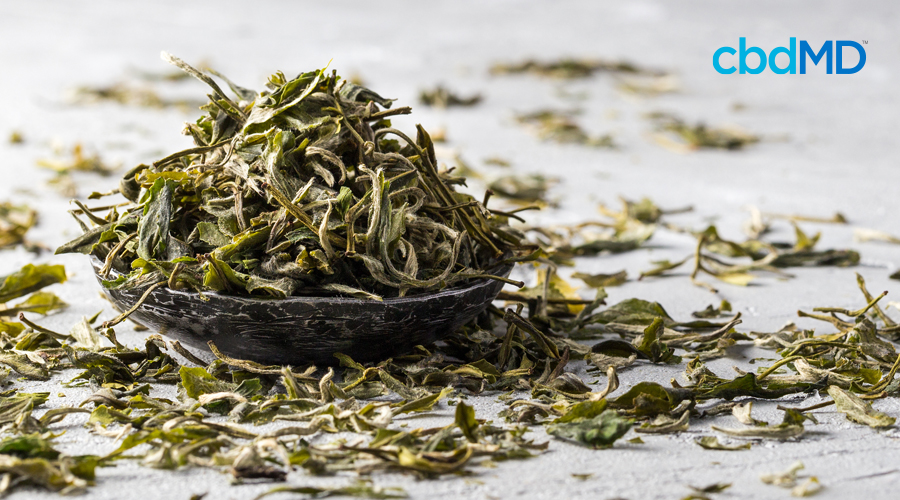 Dried tea leaves sit in a small dish surrounded by strewn tea leaves