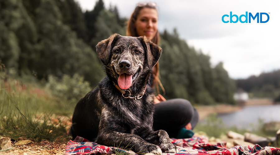 A brindle brown and black dog sits next to a river on a blanket near her owner