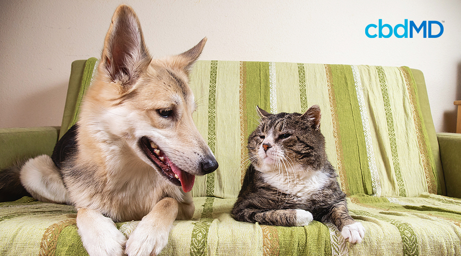 A cat and a dog look at each other as they sit together on a green couch