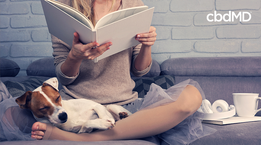 A jack russell terrier sits on his owners lap as she reads a large white book