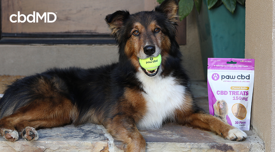 A brown and white dog sits with a tennis ball in its mouth next to a bag of paw cbd treats