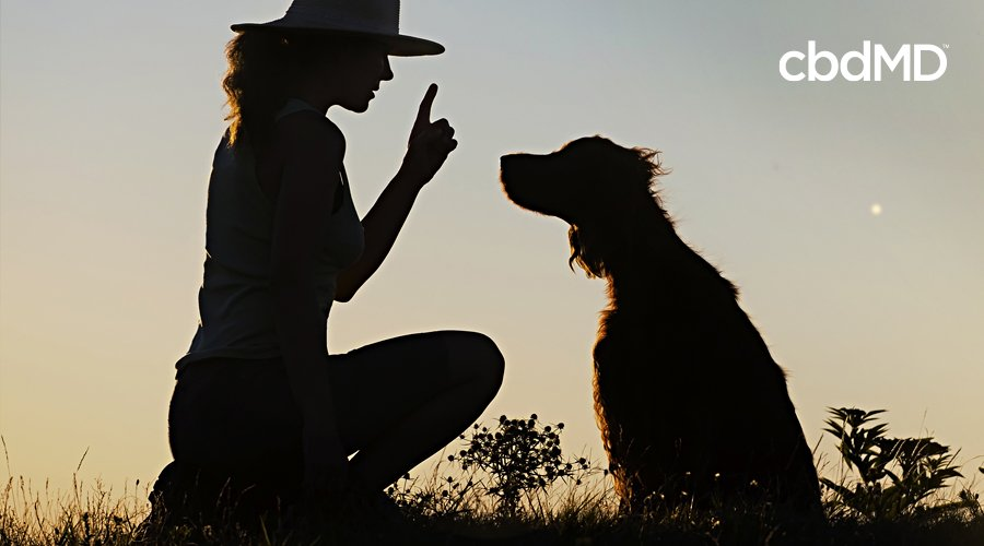 A woman in a broad brimmed hat raises a finger as she trains her dog in a field