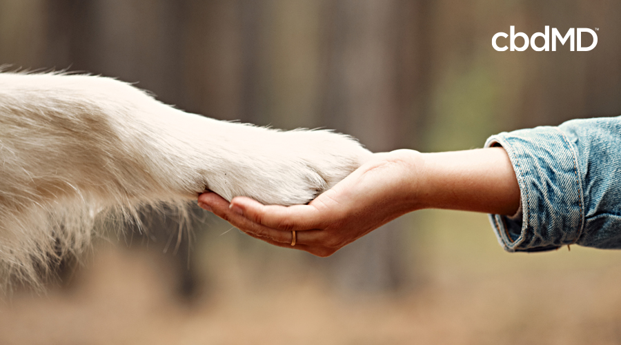 A woman holds out a hand and a large white dog places its paw in her hand