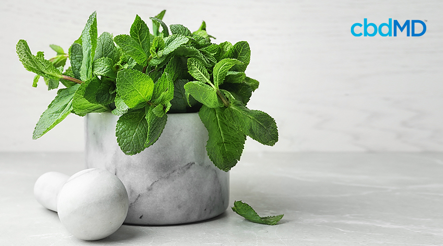 A mint plant sits in a white pot on a white floor