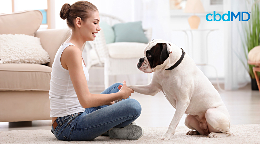 A woman sits in her living room with her dog and asks it to shake