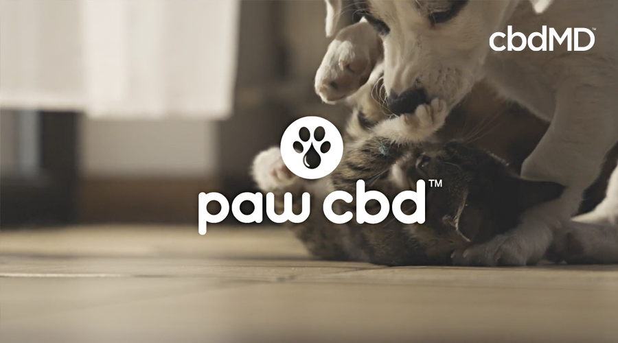 A cat and a dog roll on the floor playing in black and white with the Paw cbd logo over them
