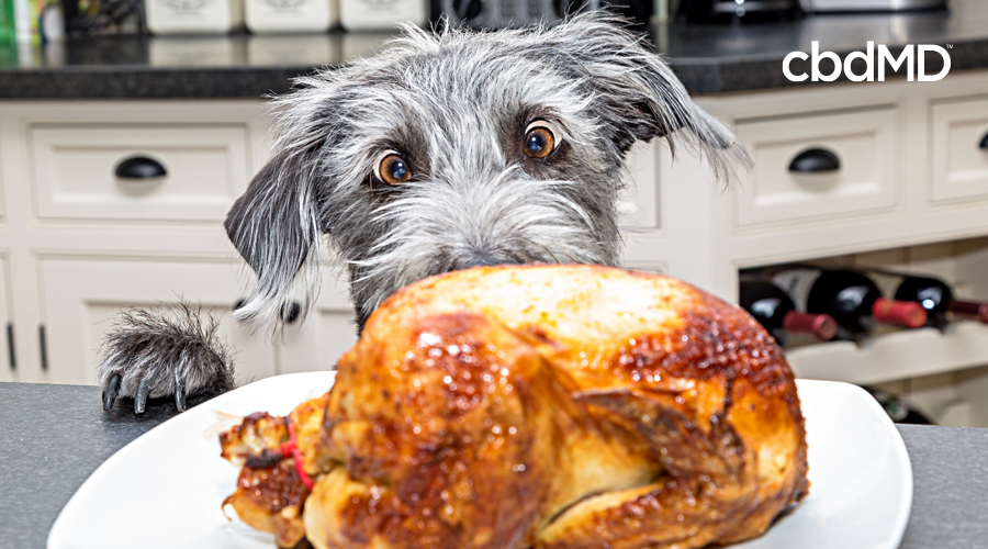 A fluffy grey dog stares wide eyed over the top of a cooked turkey