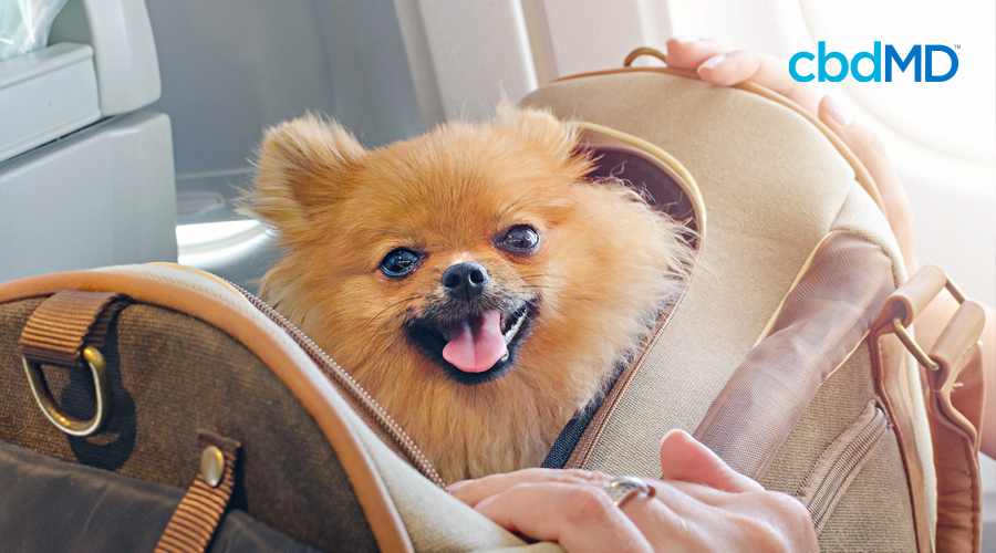 A little brown dog sits in a travel carrier at an airport