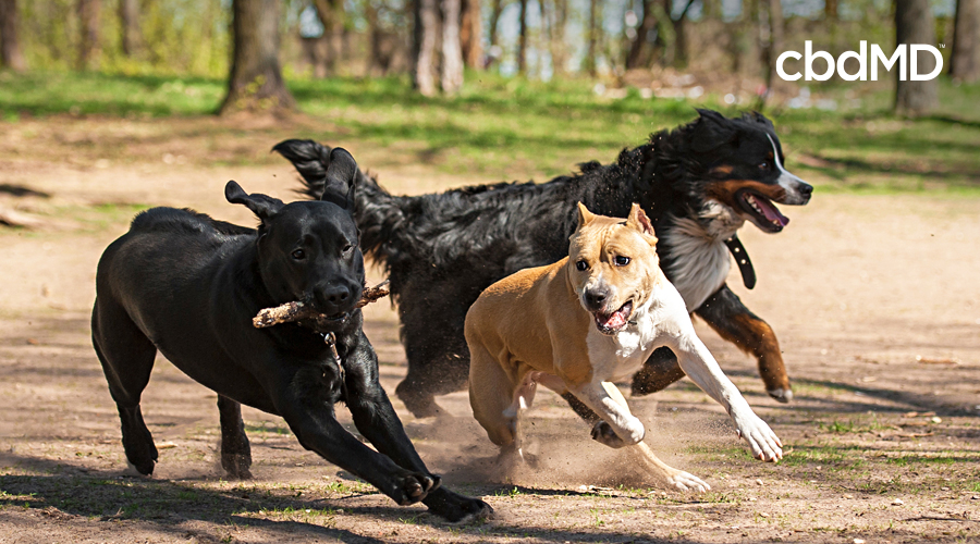 A group of larger dogs runs in the park surrounded by trees