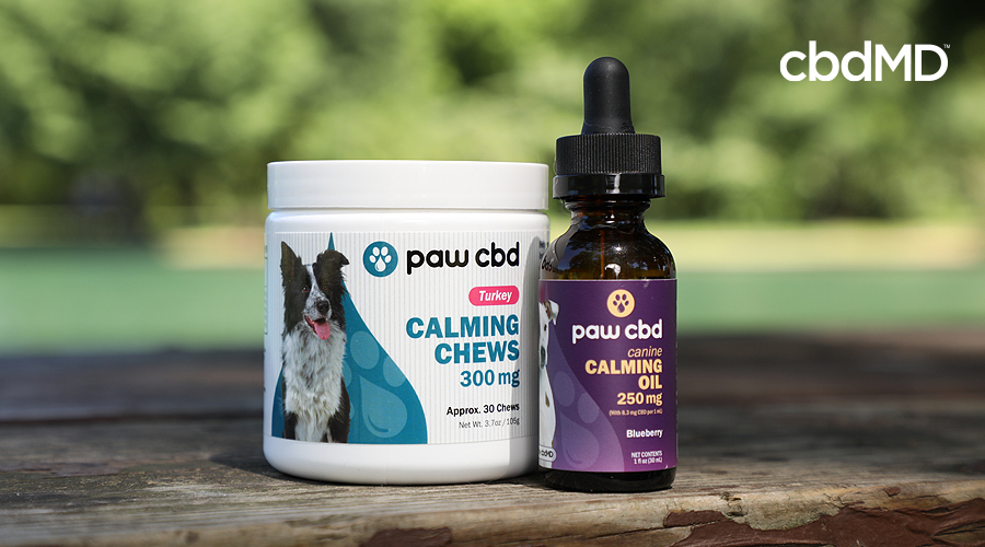 A pair of cbd products for pets from cbdmd sit on a brick railing