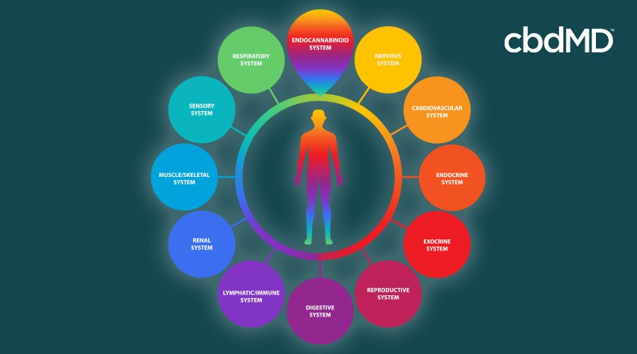 A colorful diagram shows multiple systems in the body on which supplements may act