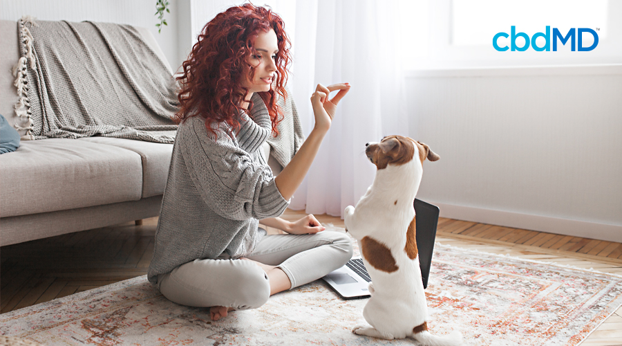A red haired woman sits on her rug and holds a treat out to her dog who sits at attention