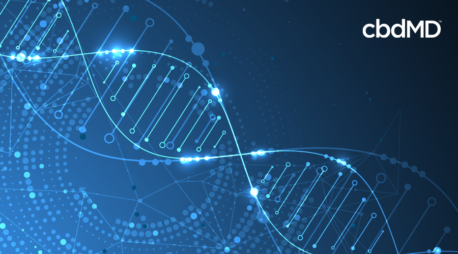 A blue and white depiction of a DNA molecule stretching across the image