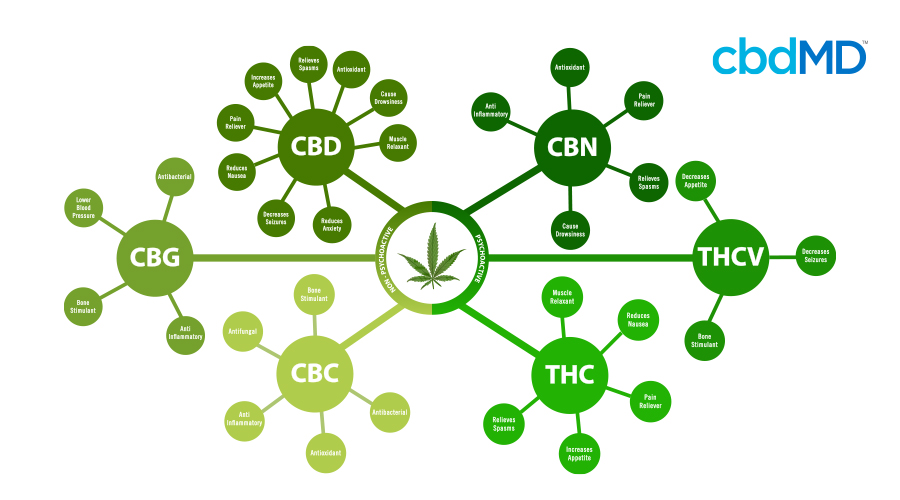 A diagram in green shows all the cannabinoids most prevalent in cannabis