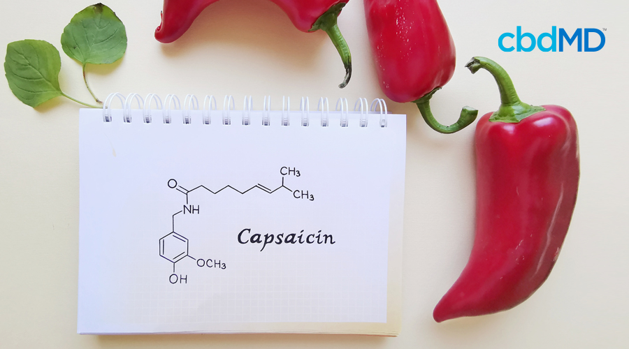 Red chili peppers flank a white note pad with the chemical diagram of capsaisin drawn on it