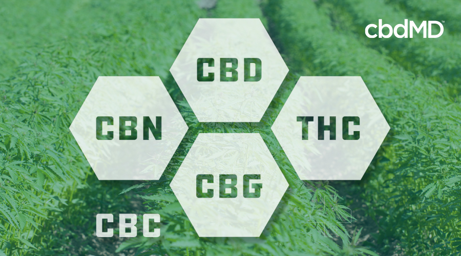 A translucent diagram shows the main cannabinoids in hemp over a field of cannabis
