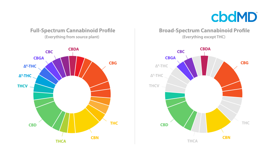 Two color coded pie charts side by side show the difference between full spectrum and broad spectrum cbd