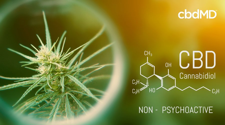 A cannabis plant surrounded by a bright corona sits on a blurred gold background next to a molecular diagram of cbd