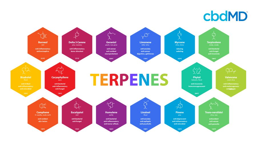 A colorful diagram shows the multiple terpenes present in cannabis